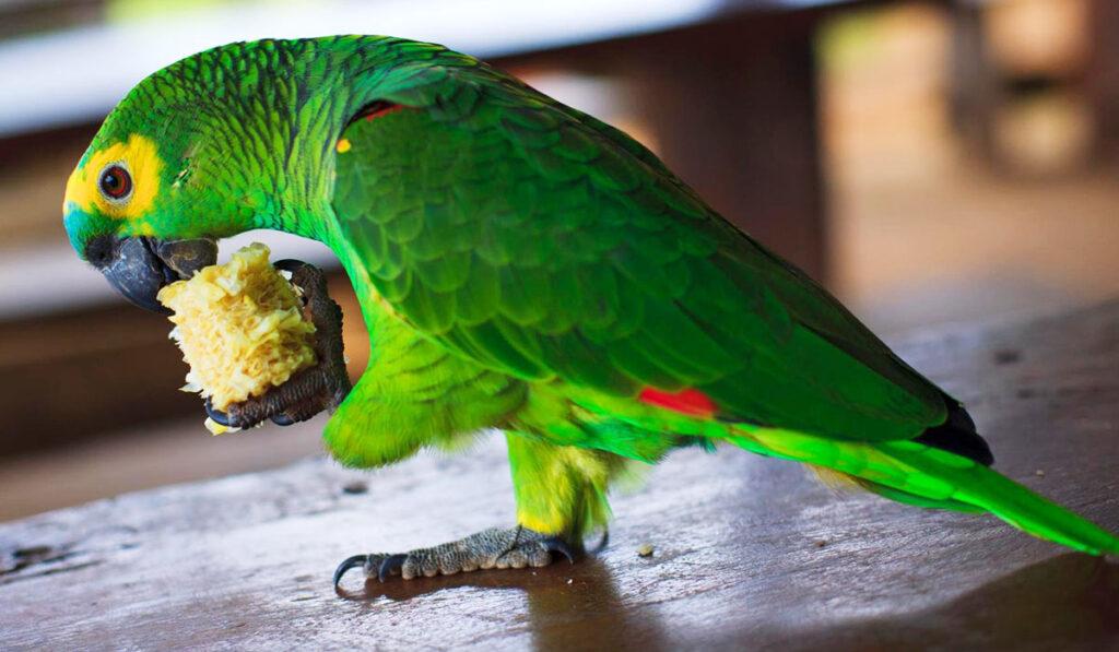 Красивый и здоровый попугай фото
