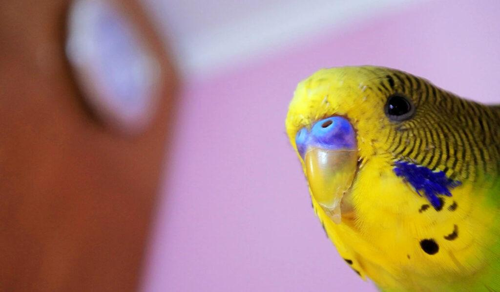 Любопытный попугай фото