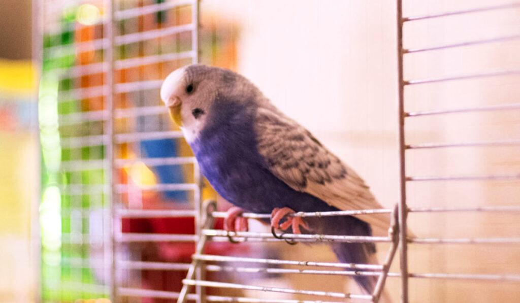 Попугай на клетке фото