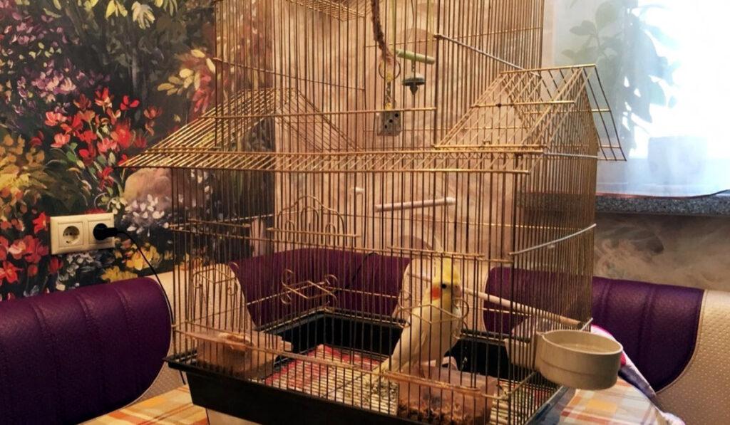 Попугай в просторной клетке фото