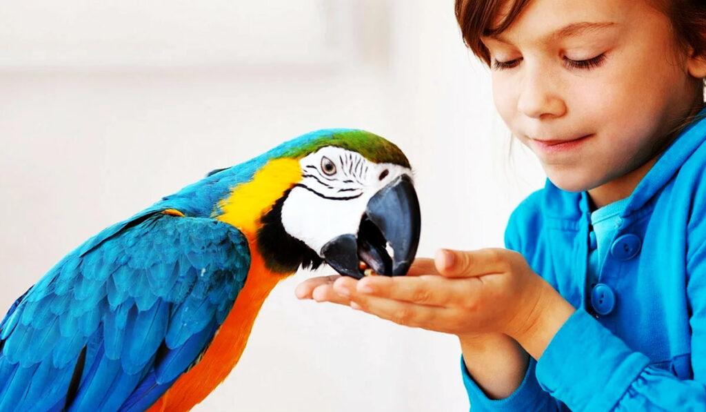 Попугая кормят с руки фото