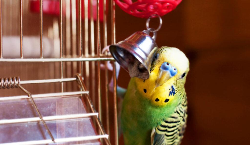 Волнистый попугай возле клетки фото