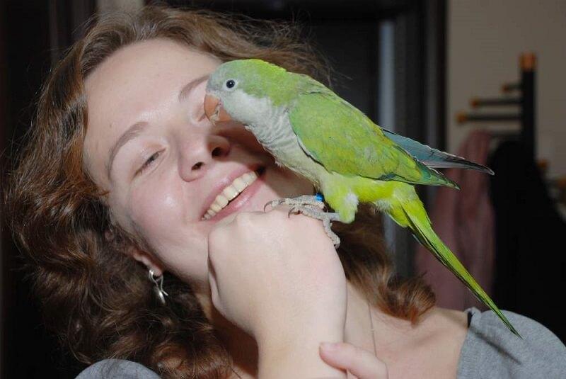Разновидности говорящих попугаев