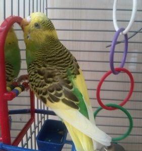зеркальце в домик птичке