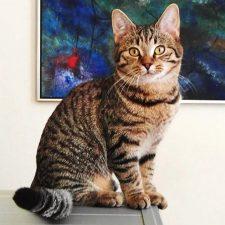 Кельтская кошка - хороший охотник