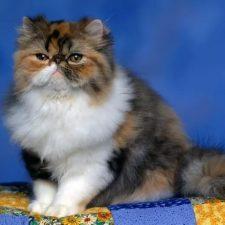 Персидская кошка - плюшевая игрушка