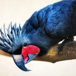 Черный пальмовый какаду - агрессивный вид