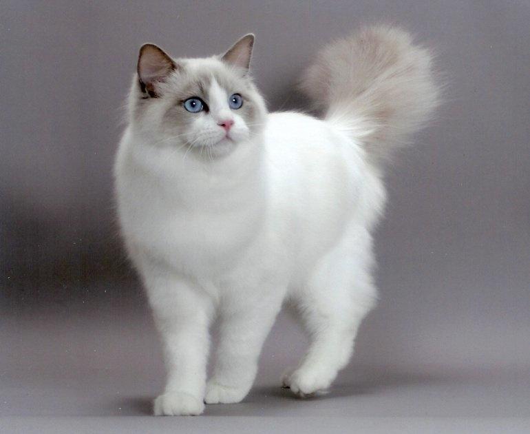 очень красивые фото кошек словам благовещенки