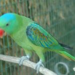 Большеклювые попугаи - необычный вид