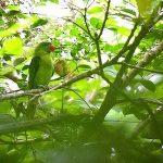 Большеклювые попугаи - уход