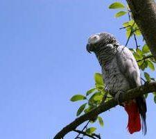 Попугай жако - уход