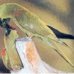 Толстоклювый ара - особенности вида