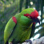 Толстоклювый ара - птицы с мощным клювом