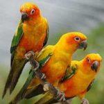 Попугай аратинга - дружелюбный вид
