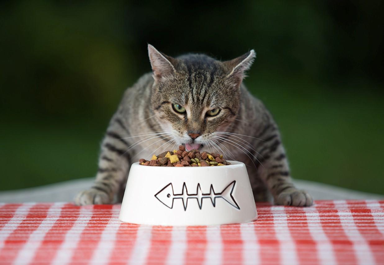 Избалованность кошек