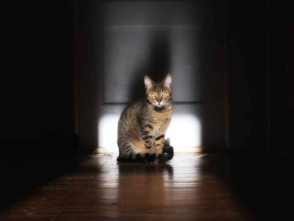 Кошка завывает по ночам