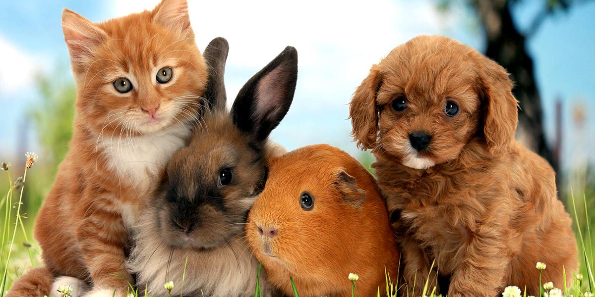 Виды домашних животных