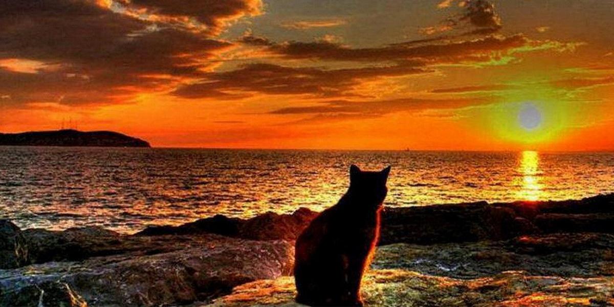 Фото кошки на закате