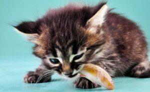 Котенок ест рыбу