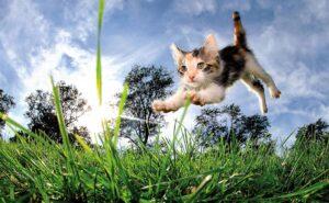 Маленький котенок в прыжке