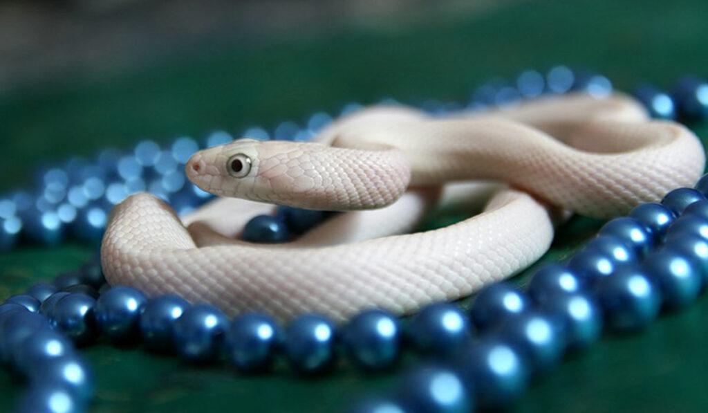 Экзотическое пресмыкающееся змея