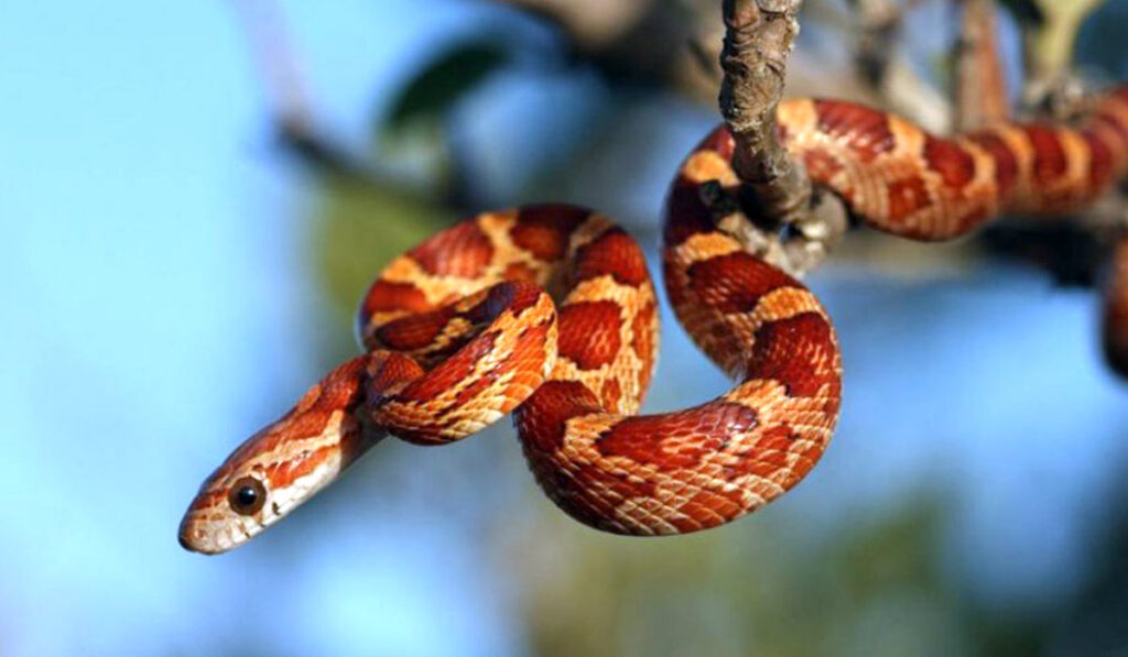 Пресмыкающееся змея