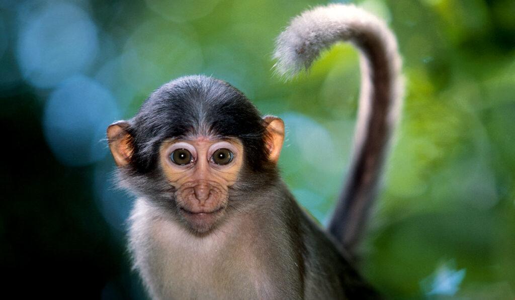 Экзотическое животное обезьяна
