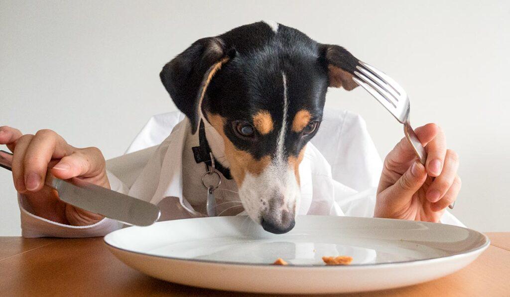 Корм для больной собаки