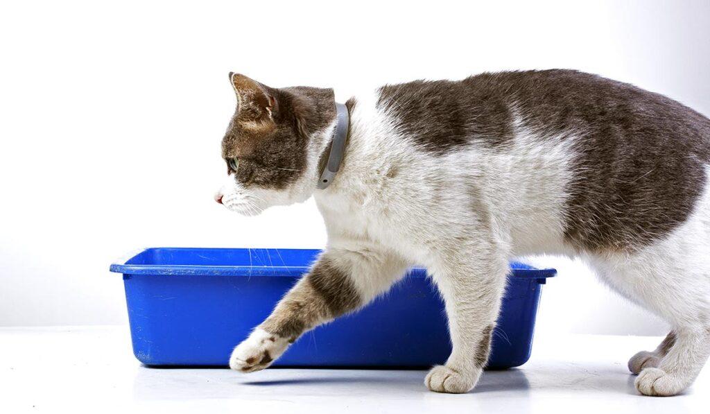 Туалет кошки