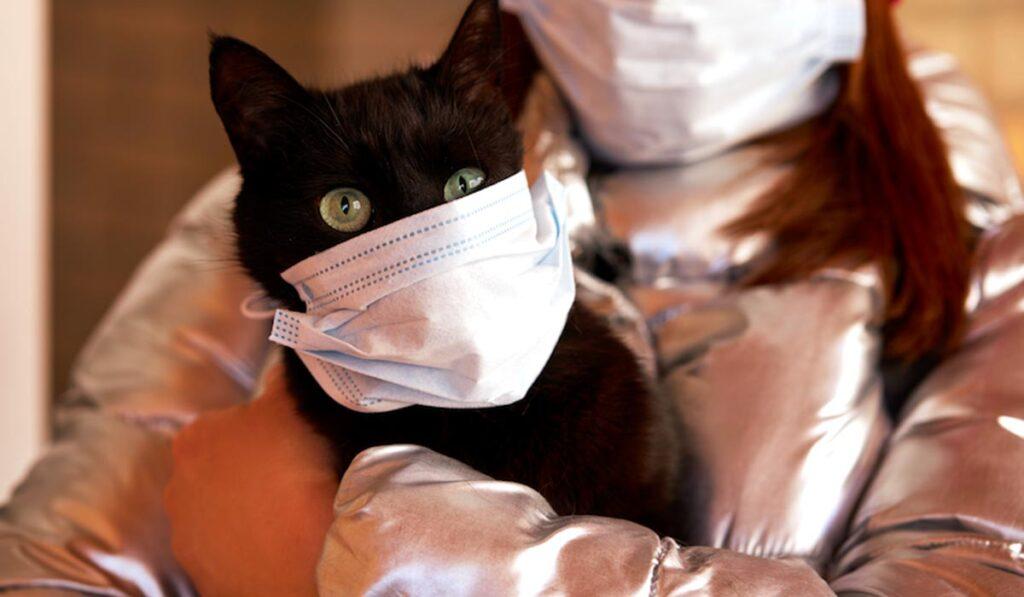 Кошка и коронавирус