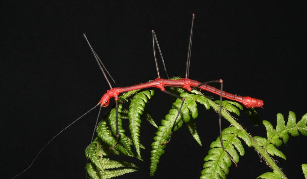Красивое насекомое палочник