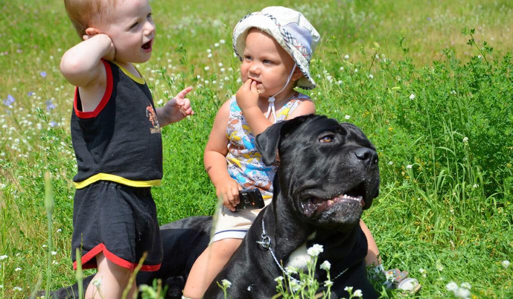 Кане-корсо с детьми