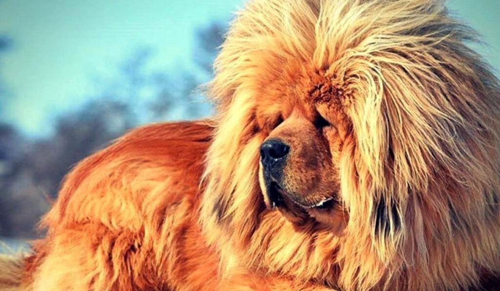 Самая дорогая собака в мире фото