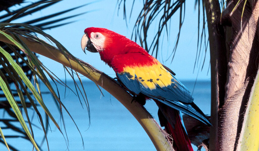 Попугай ара фото