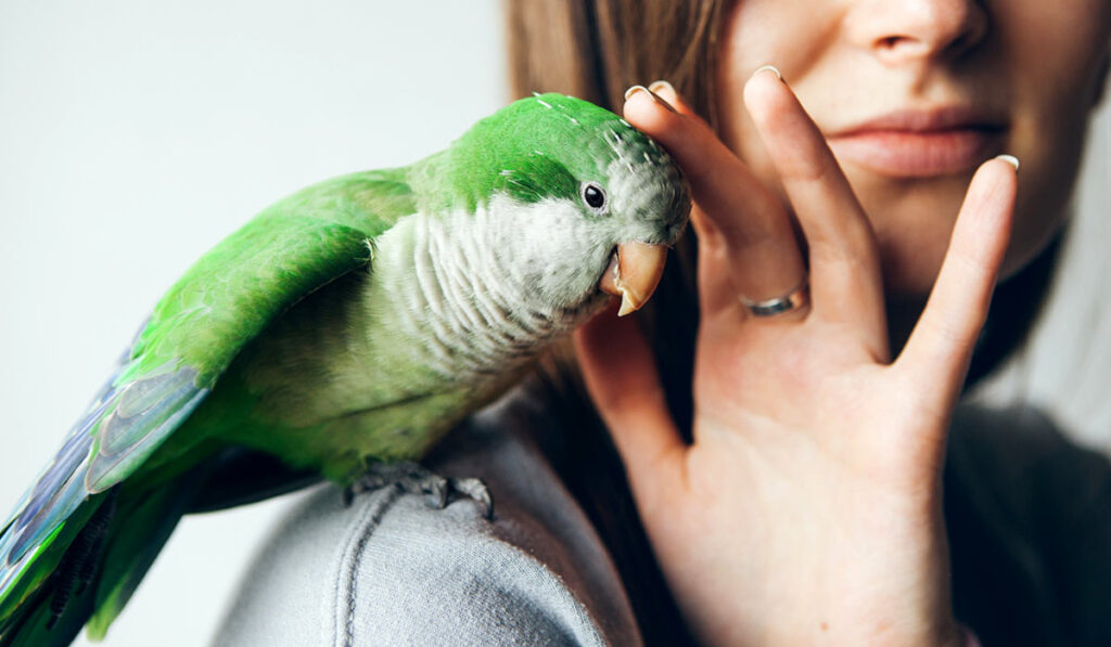 Попугай и человек
