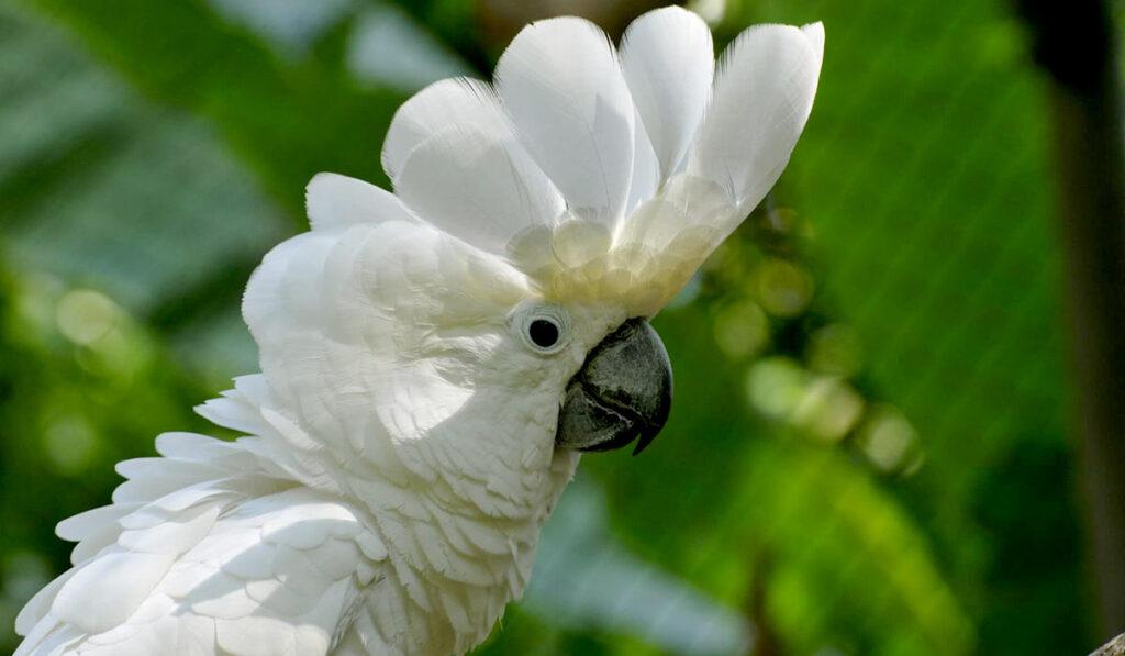 Птица какаду фото