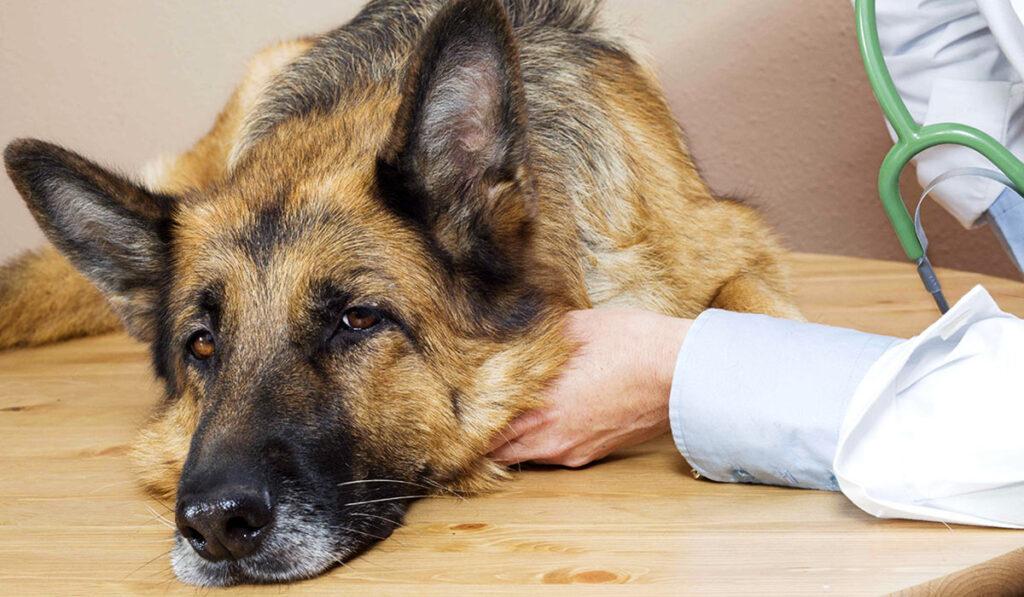 Чумная собака и человекфото
