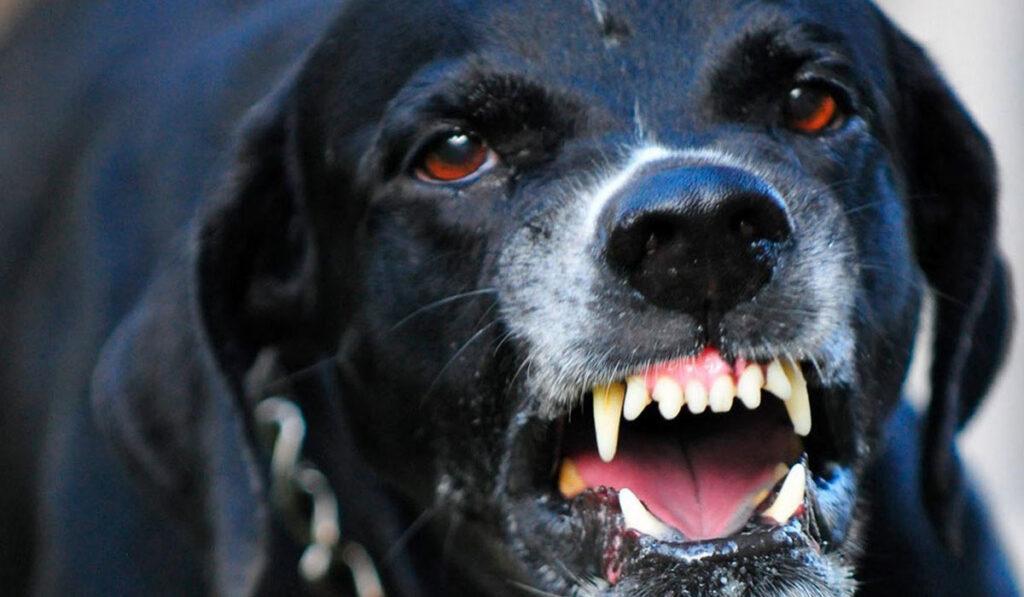 Нервная форма чумы у собакфото