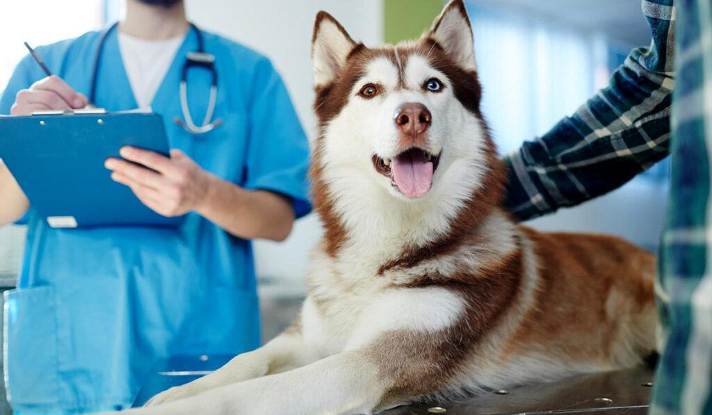 Собака в клиникефото