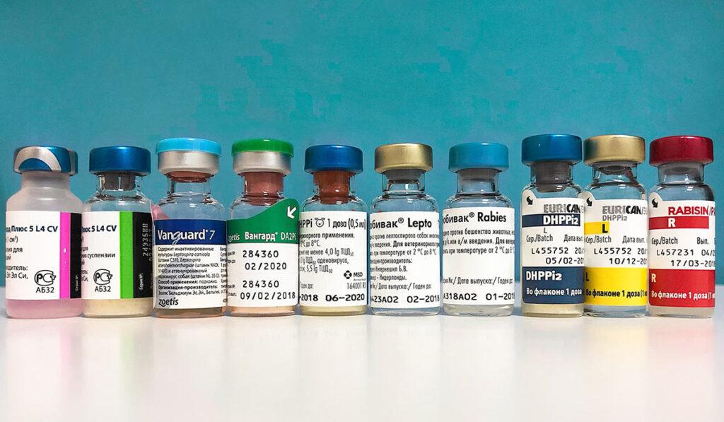 Вакцинация собакфото